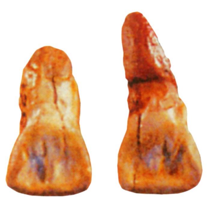 小龙潭发现的化石