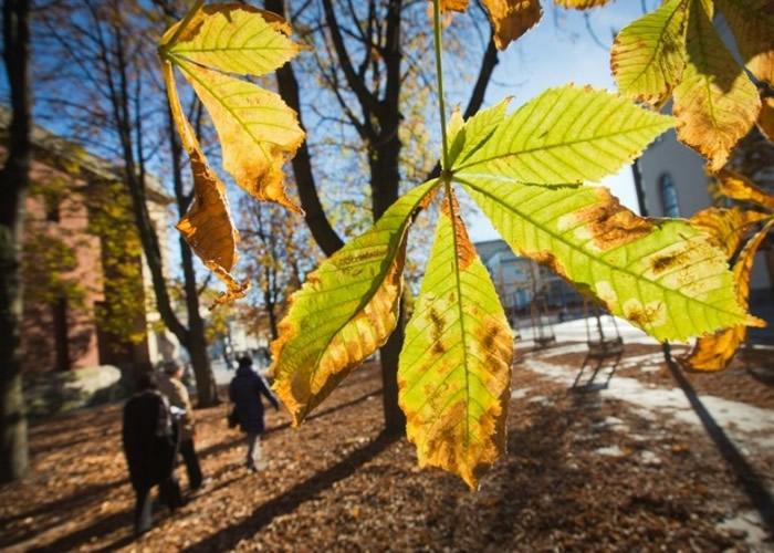 国际自然保护联盟:欧洲过半原生树木面临灭绝危机