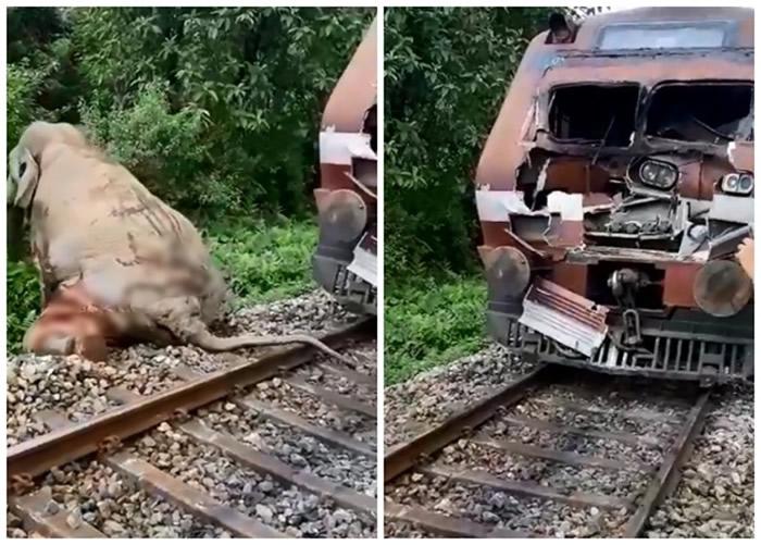 印度西孟加拉邦大象穿越铁轨时被火车撞至皮开肉绽 痛苦挣扎爬离令人心碎