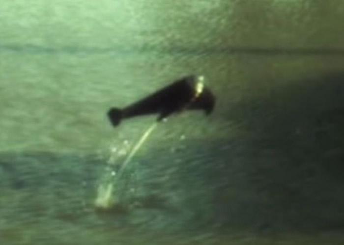 英国伦敦帝国学院研发能模仿鱼跃的机器人 或成监察理想工具