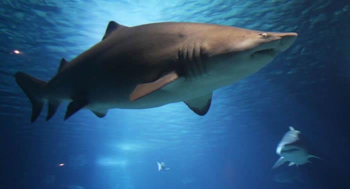 KISS乐队将在澳大利亚大海上为鲨鱼举行演唱会