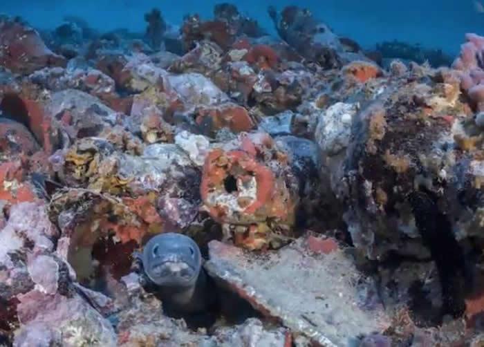 西班牙马约卡岛附近海底发现1800前罗马帝国沉船 船上装满橄榄油、葡萄酒及番茄酱