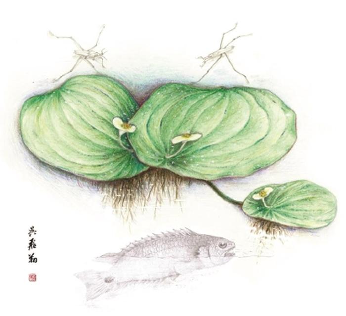 长梗似浮萍叶及伴生动物复原图