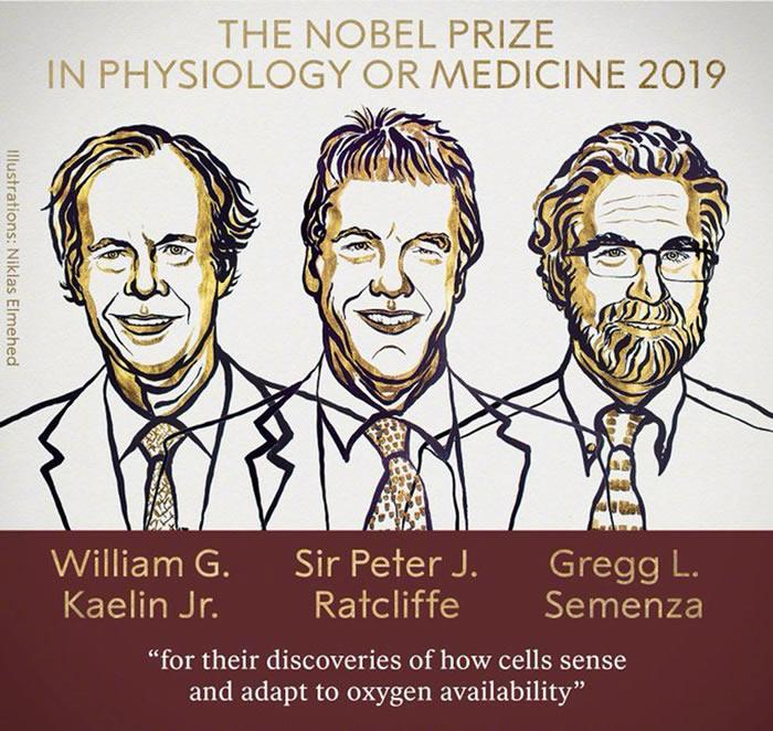 2019年诺贝尔生理学或医学奖揭晓:威廉·凯林,彼得·拉特克利夫和格雷格·塞门扎获奖