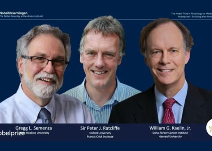 2019年度诺贝尔奖医学奖:William G. Kaelin Jr等3学者研究细胞感知氧气机制获奖