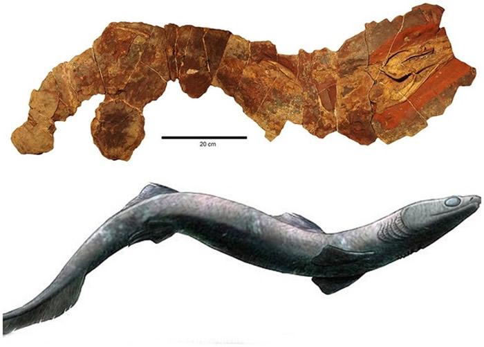 研究人员以电脑重塑该条亮齿鲨化石的原貌。