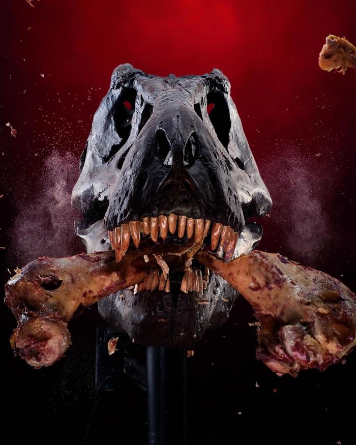 一台为了研究霸王龙强大咬合力而生的机械霸王龙咬断一根骨头。 虽然霸王龙的头骨看起来是由关节连起,但是现在科学家认为霸王龙必须要有牢牢固定在一起的头骨才能发挥碾碎