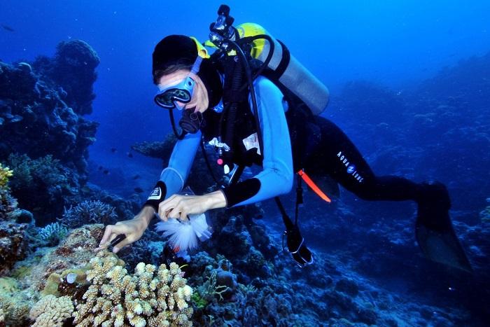 研究员 Peter Souter 在昆士兰海域采集海绵样品(图自:Eric Matson / 澳大利亚海洋科学研究所)