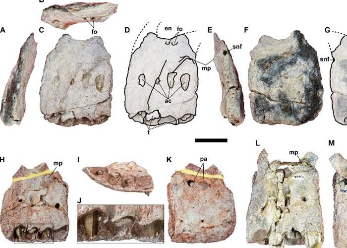 泰国首次发现最大食肉恐龙的骨骼化石。