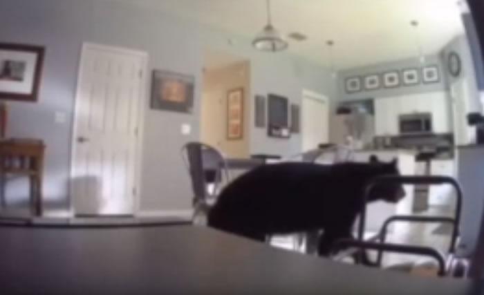 美国佛罗里达州一户人家遭熊光顾 主人在楼上全然不知