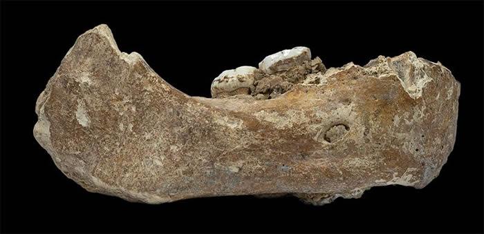 目前发现的关于丹尼索瓦人的最大化石。