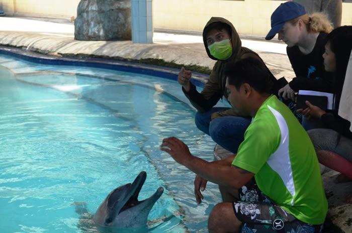 """印尼峇里岛酒店推""""海豚疗法"""" 2只海豚眼瞎还掉光牙齿"""