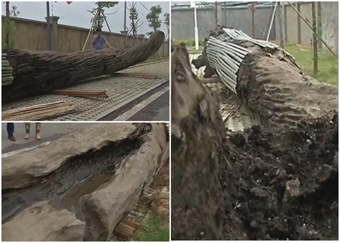 江西萍乡修建河堤时意外挖出10吨重13米长乌木 专家:树龄或逾千年