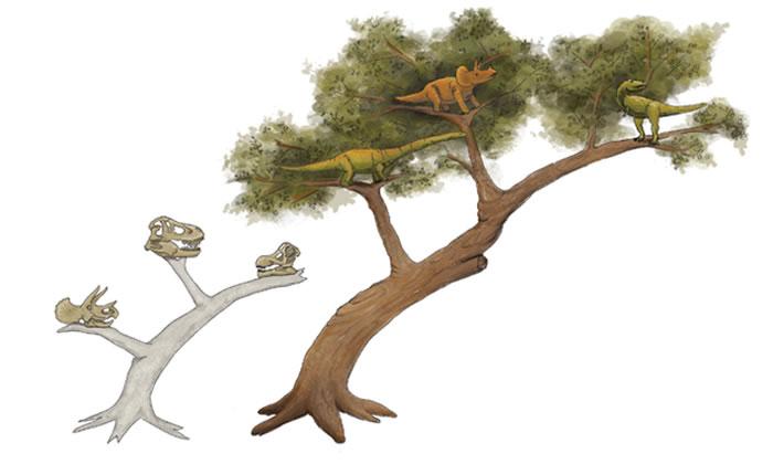 目前的恐龙演化树从1887年开始使用,基本上是基于骨盆形态的差异。最近,科学家对这一分类方式的基础提出了新的观点