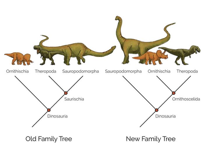 """左边是传统的恐龙演化树,根据骨盆形态的差异,将鸟臀目和蜥臀目分开。右边是马修·巴伦及其同事提出的新演化树,其中鸟臀目与兽脚亚目形成了一个新的类群,叫做""""鸟腿目"""""""