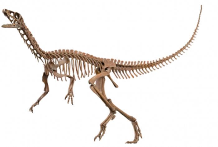 月亮谷始盗龙是一种早期恐龙,它可能是解决目前关于恐龙演化树争论的关键