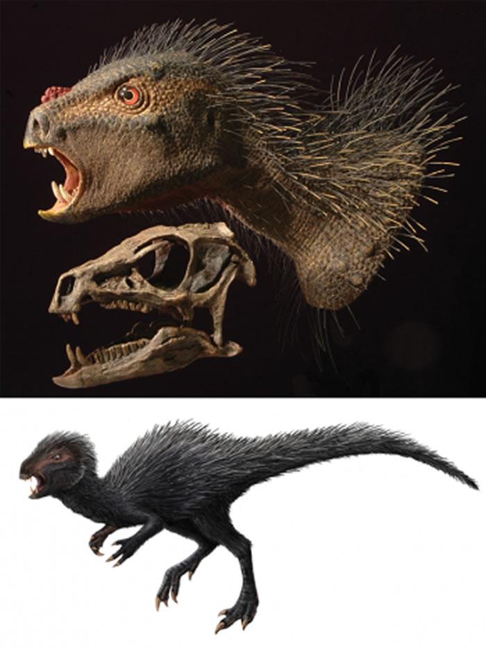 和始盗龙一样,塔克畸齿龙也是近几十年来发现的早期恐龙之一。这些新发现促使一些古生物学家重新思考恐龙的分类