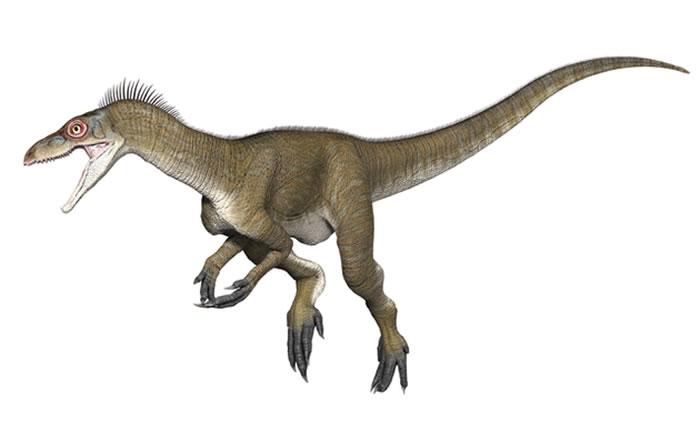 """古生物学的很多内容都来自主观的描述和假设,比如始盗龙的""""抓握前肢""""与后来的兽脚亚目恐龙或蜥脚类恐龙之间到底有多大的相似性"""