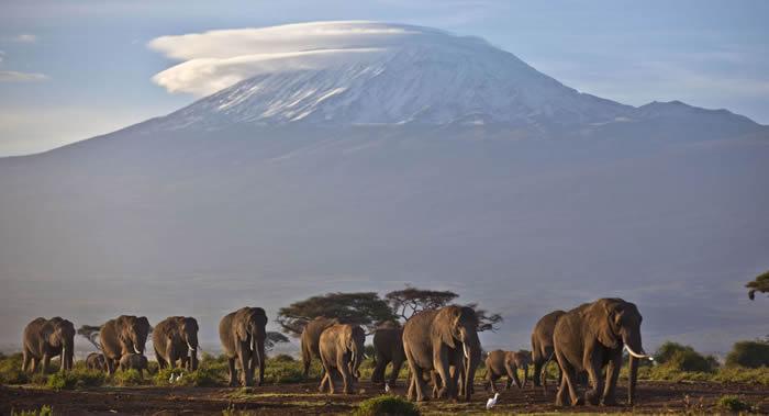 近两个月来在津巴布韦万盖国家公园共有55头大象死于饥饿和口渴