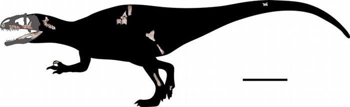 研究人员将22块新发现的化石按比例缩小以重建苏瓦提暹罗盗龙的骨骼。 右下比例尺等于一公尺。 IMAGE COURTESY OF CHOKCHALOEMWONG