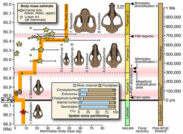 美国科罗拉多州新发现的化石记载了白垩纪-早第三纪物种灭绝后生物的反弹