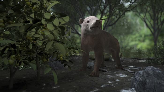 美国丹佛自然与科学博物馆研究人员发现白垩纪到古近纪大灭绝后生物恢复的化石记录