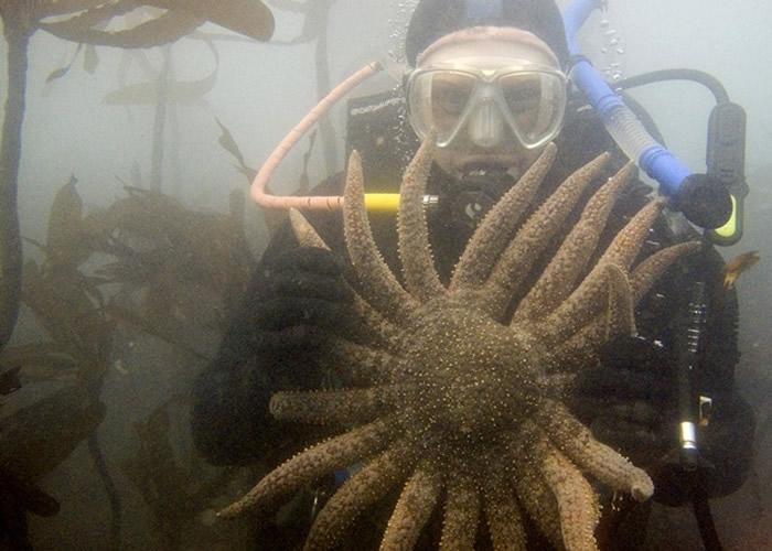 美国加州海域3.5亿只紫海胆吞噬摧毁海藻 恐酿海洋生态灾难
