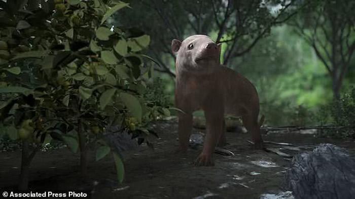 只有体型比老鼠还小的动物在撞击灾难中幸存下来。