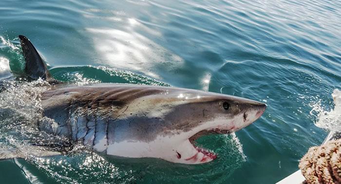 澳大利亚旅游圣地圣灵群岛两名英国游客遭鲨鱼袭击受伤