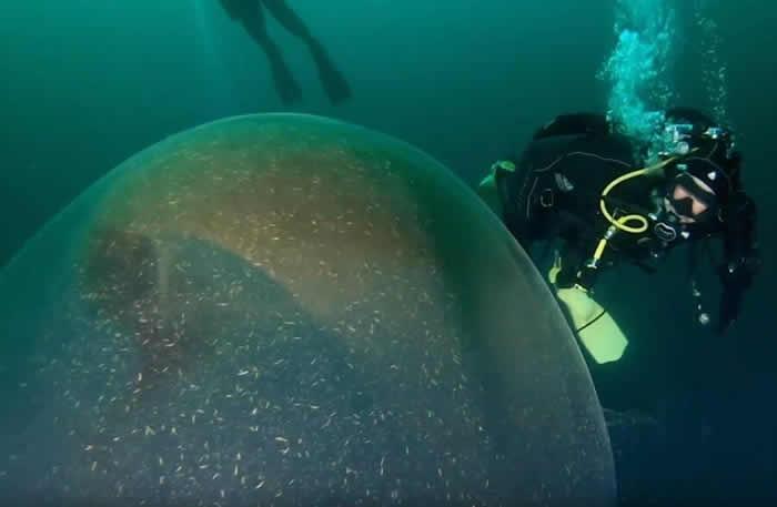 """挪威近海中惊见""""1米高巨蛋"""" 原来是南方短鳍鱿鱼的卵囊"""