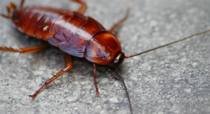 世界科技研究新闻资讯网Phys.org:研究发现世界许多地区的昆虫种群减少了三分之一