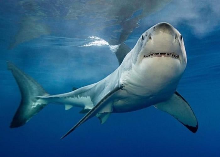 英国两名背包客在澳洲大堡礁浮潜期间遭鲨鱼袭击严重受伤