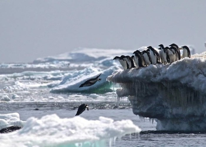 多国提出在南极建立大型海洋保育区 中国和俄罗斯反对