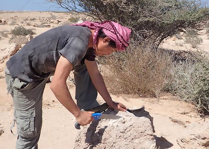 渡边刚分析珊瑚化石与现代珊瑚,得出研究结论。