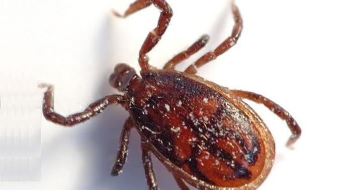 英国森林中首次发现蜱媒脑炎病毒