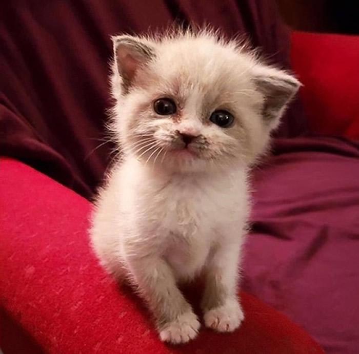 美国新墨西哥州猫奴Lauren Boutz从收容所收养的5周大猫咪迷倒百万网民