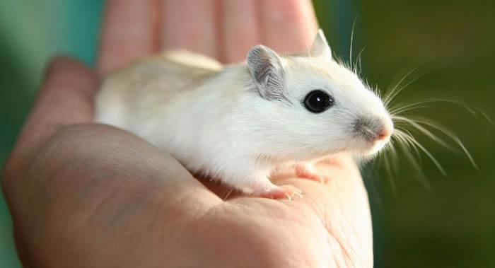 《发展》杂志:专家通过观察老鼠胚胎发现两个与卡尔曼综合征有关的基因
