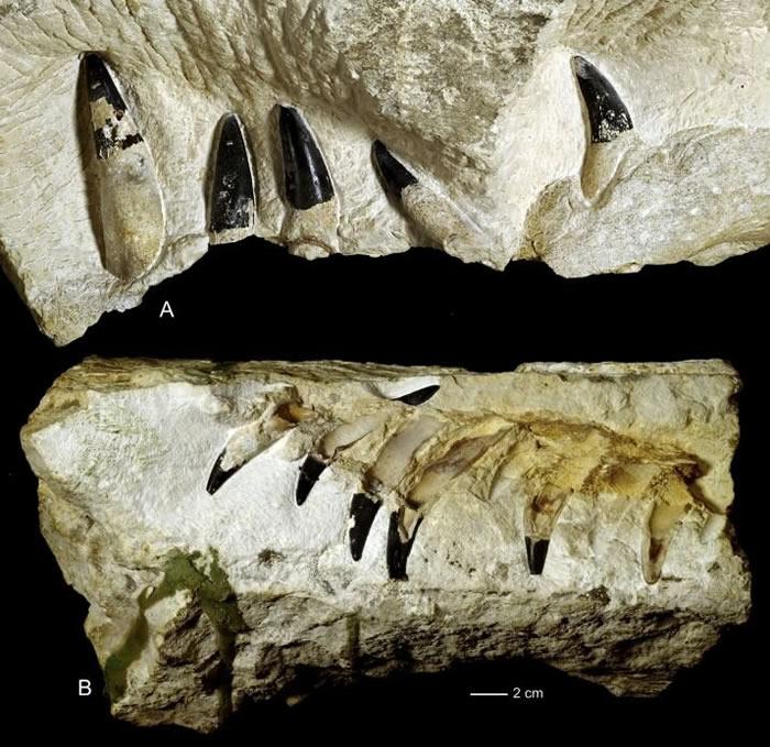 """波兰一片玉米田发现1.5亿年前的""""海怪""""上龙化石"""