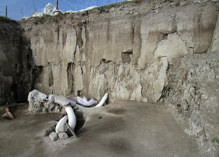 墨西哥城附近发现14000多年前用于猎捕猛犸象的人工陷阱