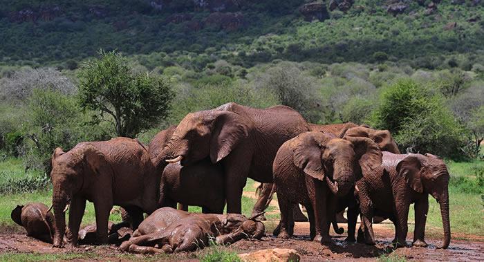 纳米比亚一头大象杀死一名奥地利游客