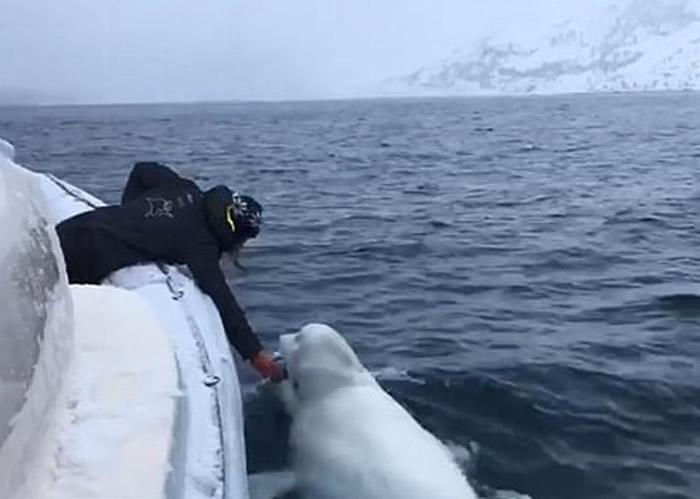 白鲸开心与南非海洋考察船船员在大海大玩抛接橄榄球游戏