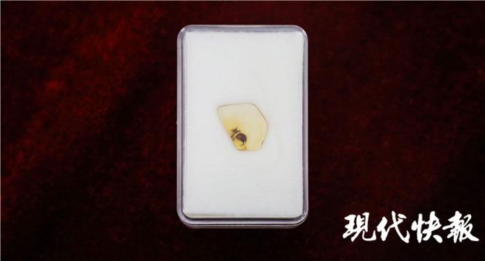 """一亿年前""""采花大盗""""缅甸访花花蚤吃花瞬间被定格 缅甸琥珀中发现有花植物昆虫传粉最早证据"""
