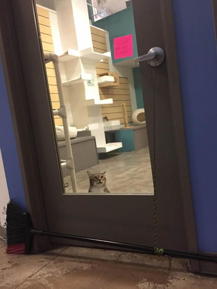 """美国德克萨斯州""""生命之友""""动物收容所猫咪""""Quilty""""偷偷开门让别的宠物逃走"""