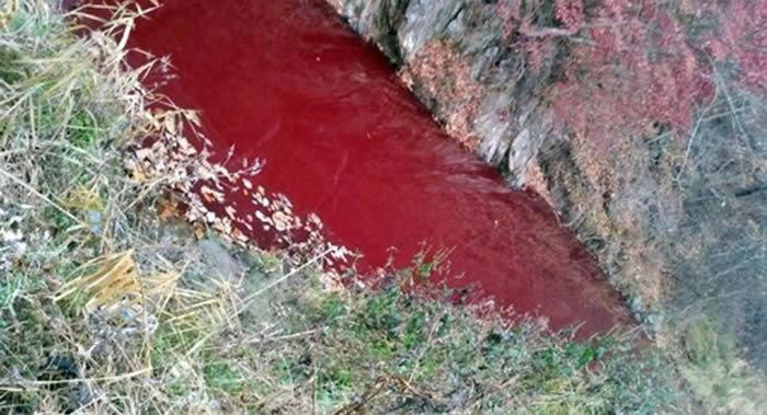 朝韩边境界河旁的临津江支流部分被猪肉血污染