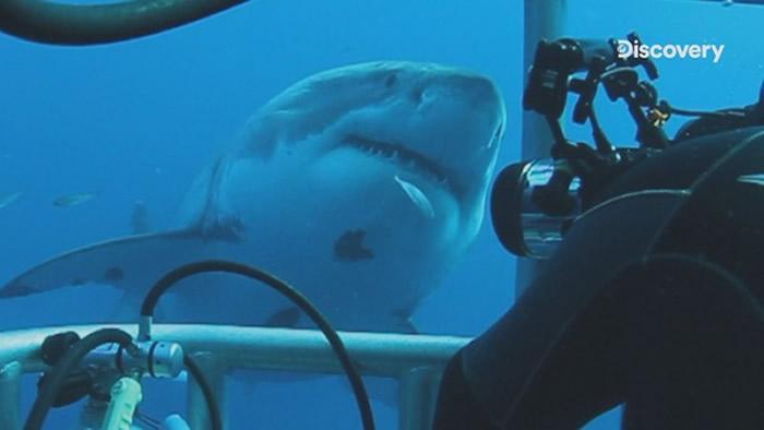 大白鲨的世界充满奥秘。