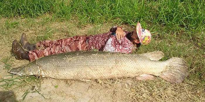 美国德克萨斯州男子人鱼大战后钓起长达2米长着锋利牙齿的狼鼻鱼(雀鳝)