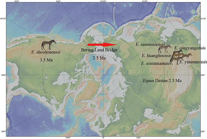 真马的北美起源及其旧大陆扩散