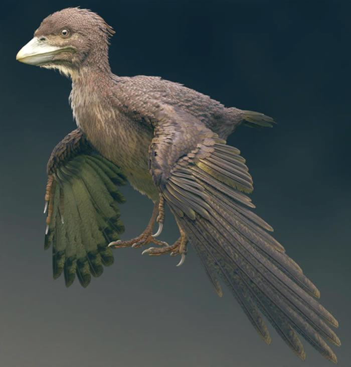 """日本福井县发现距今约1.2亿年的鸟类化石""""Fuk"""
