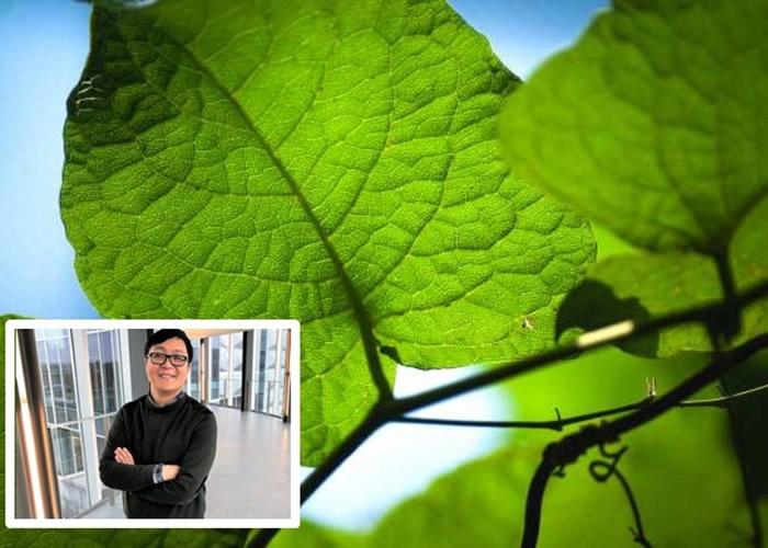 加拿大安大略省滑铁卢大学纳米研究所团队研人造叶技术 二氧化碳转化为替代燃料甲醇