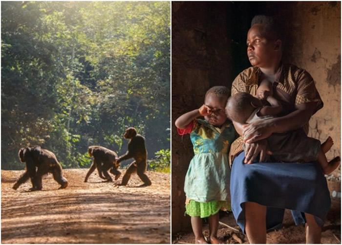 塞马塔(右图)的儿子被猩猩攻击。